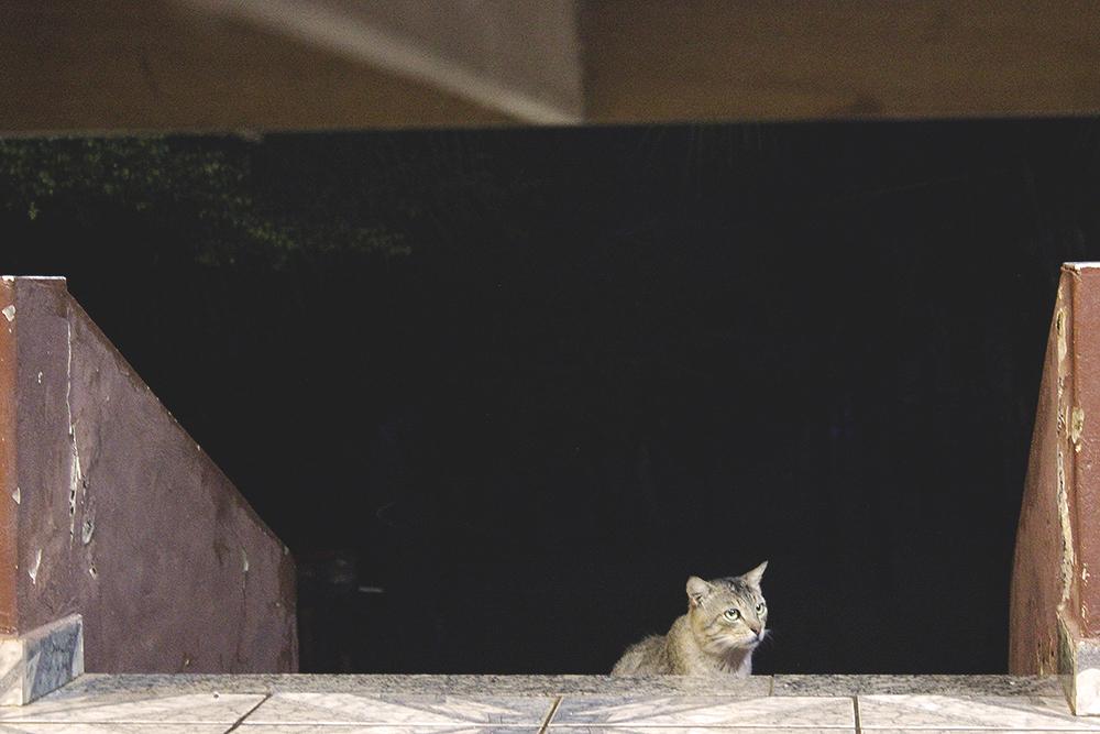 gato espionando