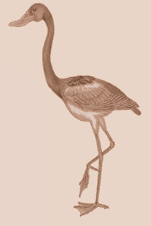 uccelli del passato