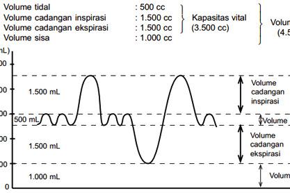 Macam Macam Volume Udara Pernapasan Dalam Paru Paru