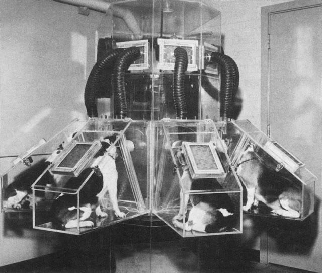 Beagle Dogs - Radioactive - Plutonium Dioxide - 01