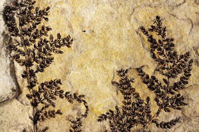 Quali sono i fossili più antichi mai scoperti: nascono dubbi