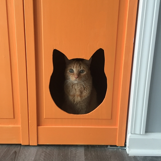 Phoebe peering through cat door