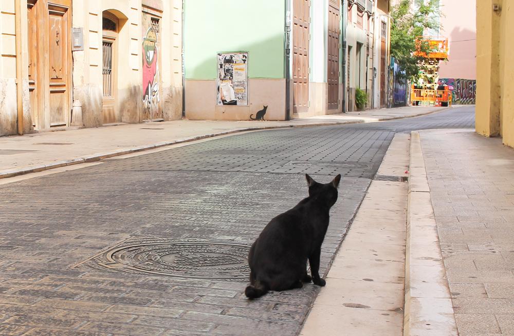 callejeando valencia ciudad gato carmen