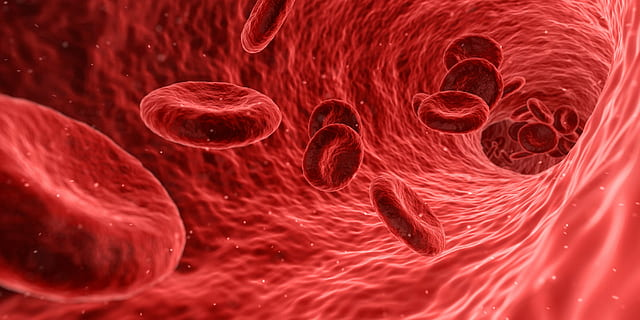 What is Plasma Donation Type Uses and Side Effects Plasma Therapy in Corona-virus-human blood-red-cells-Image