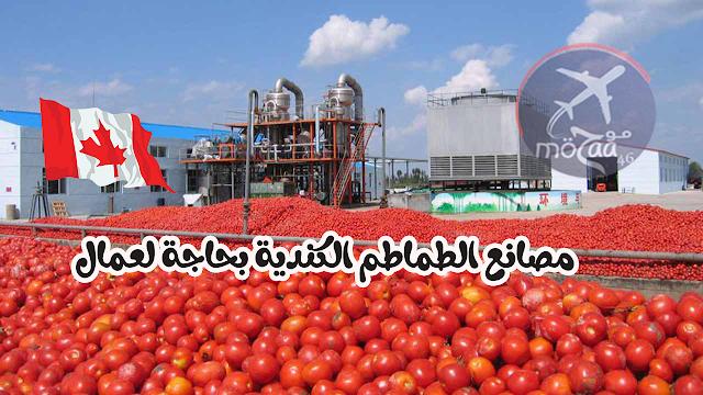 شركة كندية للطماطم تبحث عن عمال اجانب وتوفر عقود عمل lmia