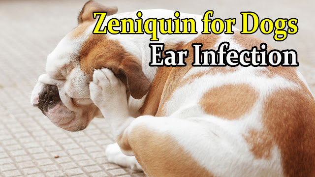 zeniquin-for-dogs-ear-infection-treatment
