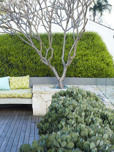 Edwina Stuart suculente arbori sculpturali trunchi design peisagistica amenajare gradina simpla piatra naturala  verde