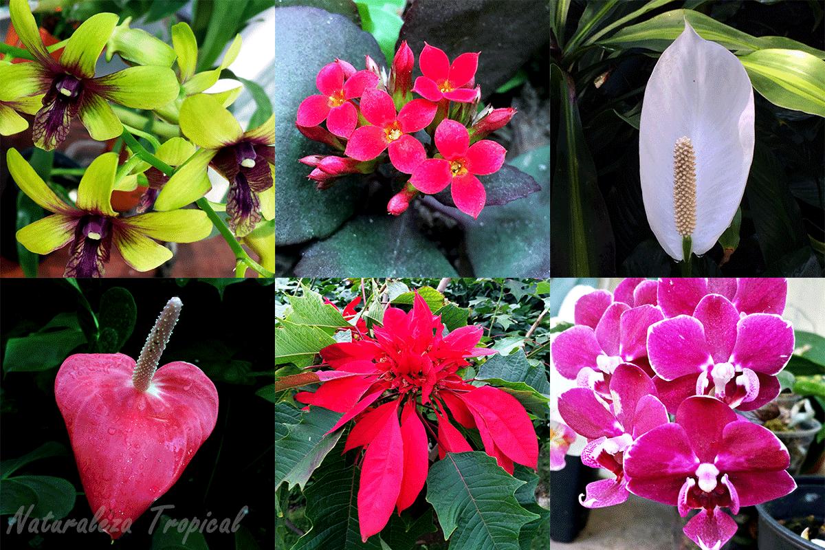 naturaleza tropical 6 plantas purificadoras del aire