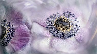 Naturaleza en macro. Fotos de plantas e insectos premiadas en IGPOTY N.13 Macro Art