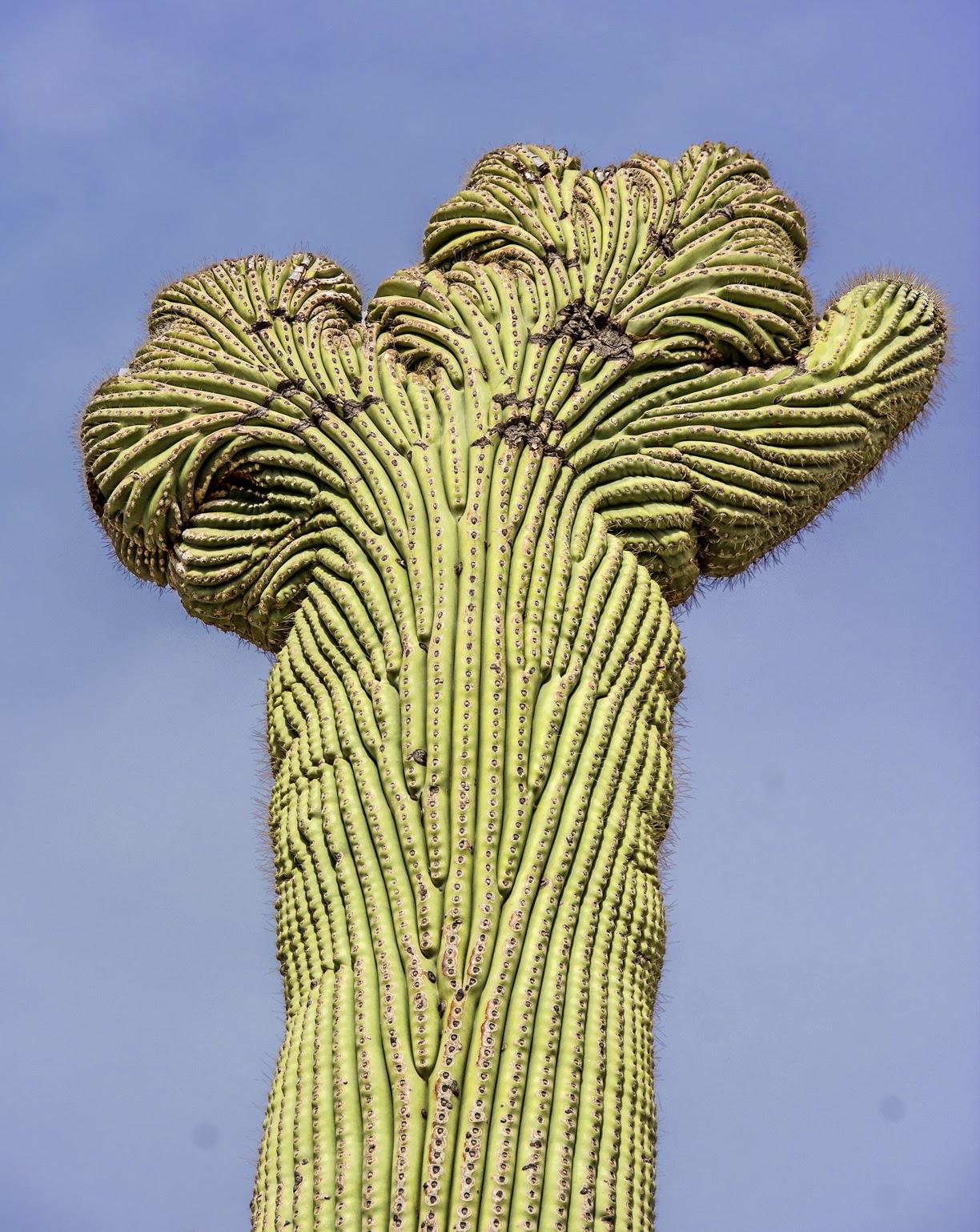 Wrap Pure - Saguaro 2 Par Vida Vida TWDXJ2xHu