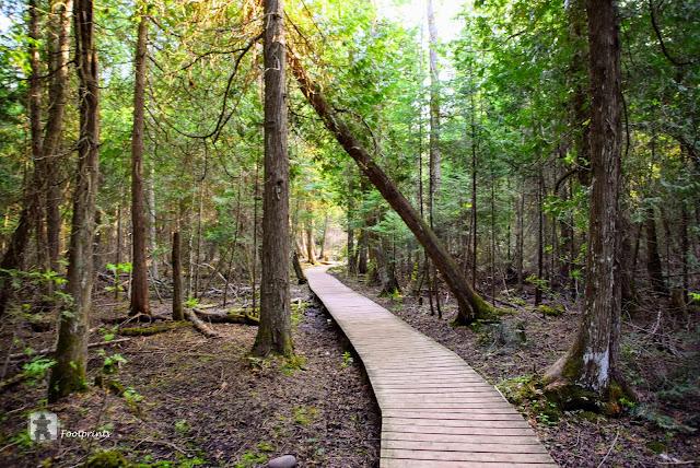 Wir begegnen Niemanden hier und hoeren nur gelegentlich das Fiepsen der Chipmunks und die Rufe der Voegel versteckt in den Baeumen. Der moosige Waldboden duftet und die goldenen Strahlen der Abendsonne verleihen dem Wald einen fast magischen Reiz.