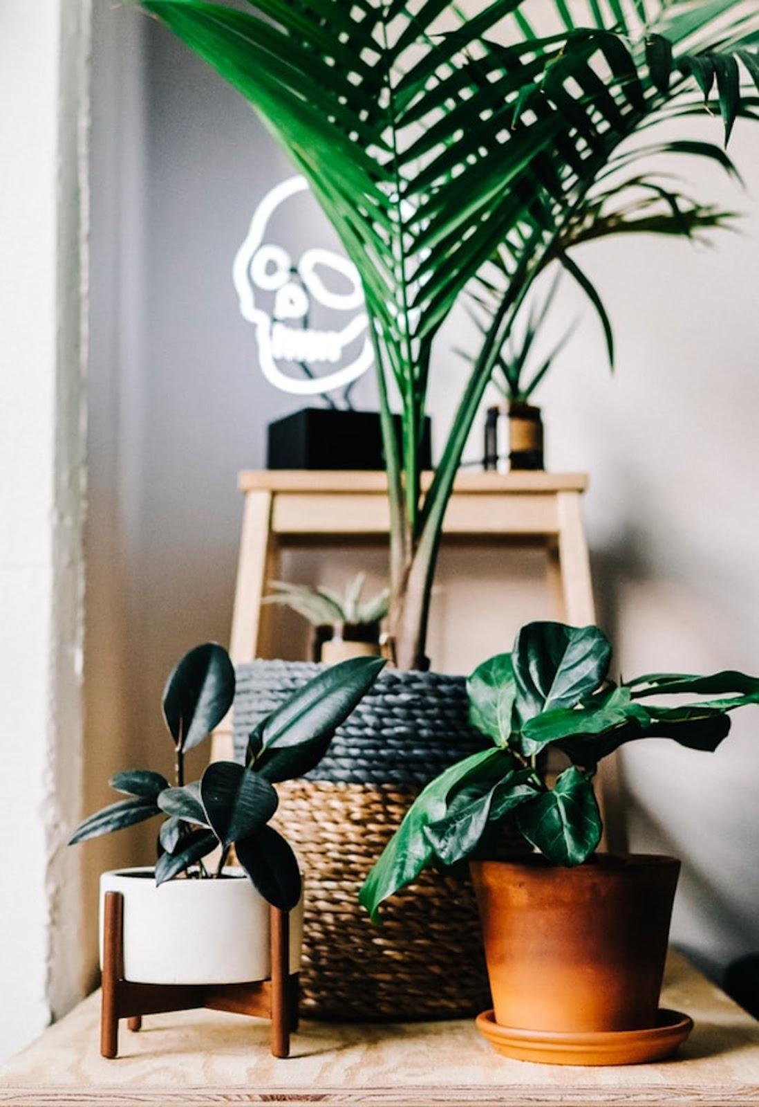 Composición de plantas en escalera