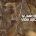 Estreia na TV Brasil série documental sobre vida selvagem na África