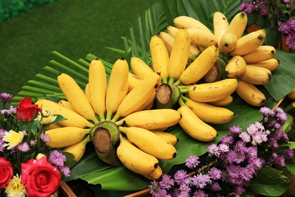 Various Benefits of Bananas, the Magic Fruit of God Giving to Humans
