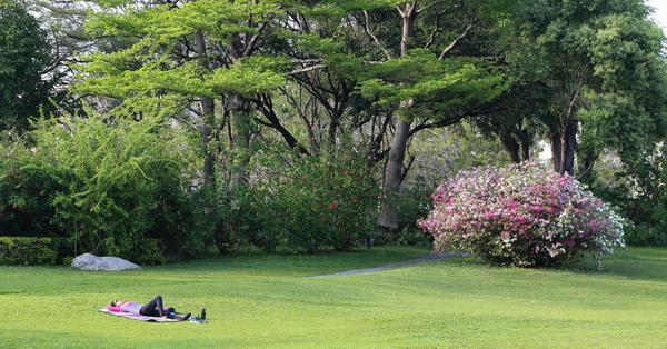 《台中.北區》台中科博館杜鵑花盛開,還有一大片綠草原可以晒日光浴