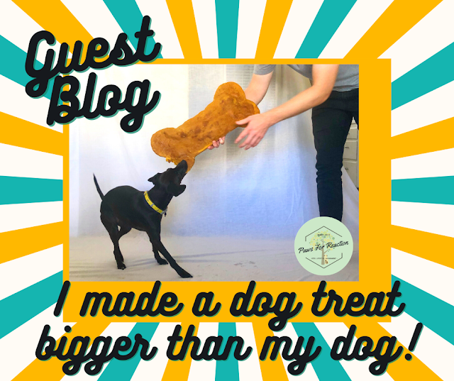 Guest blog: I made a dog treat bigger than my dog! Get the recipe
