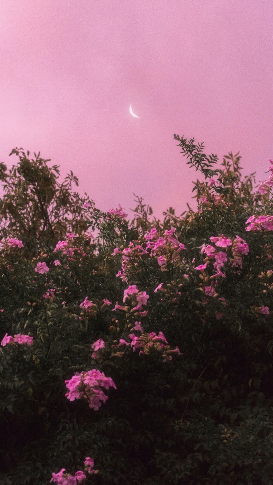 Flowers under the pink sky