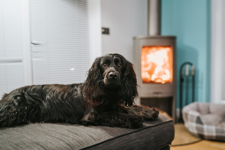 Dog Friendly Cornwall Getaway