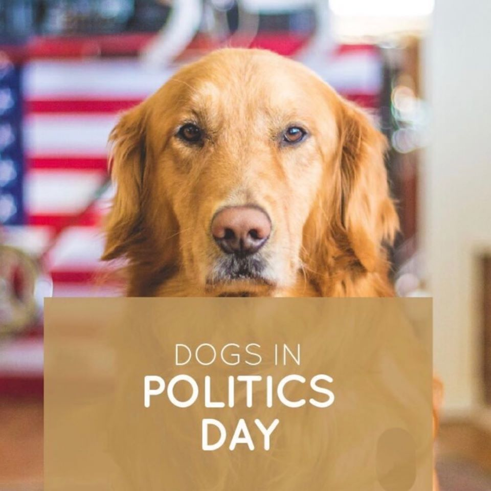 National Dogs in Politics Day Wishes Unique Image