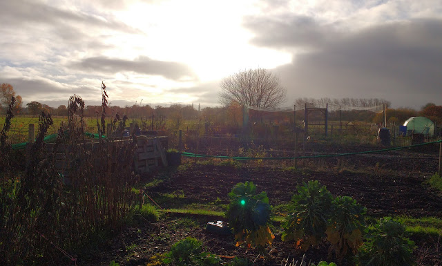 Allotment in late autumn
