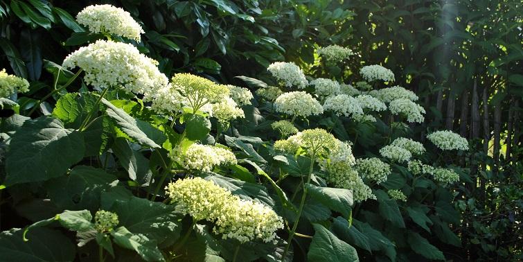 Gartendeko mit Pflanzen