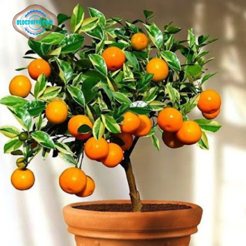 Jenis tanaman hias buah