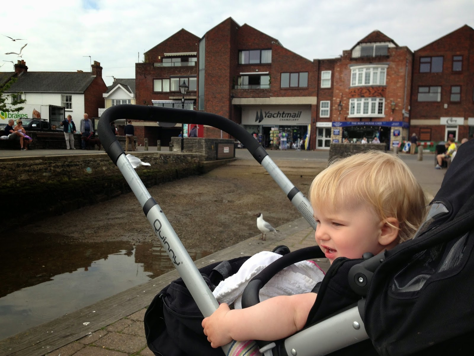 Baby Tin Box looking at seagulls at Lymington Quay