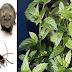 If You Get This Plant At Home, You Will Never See Mice, Spiders And Other Insects Again