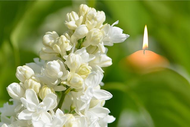 lilas blanc bougie hommage mémoire