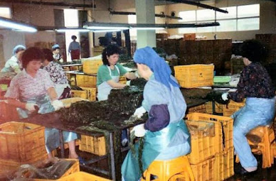 Seaweed Factory Products and Classifications