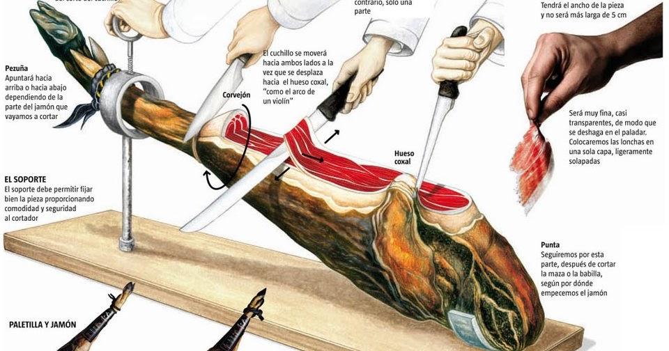 Anatomía del jamón