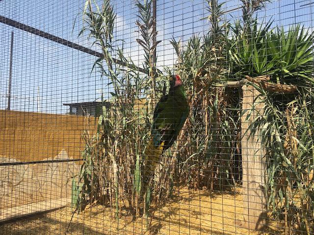 Monkey-park-los-cristianos-parrot