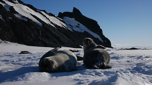 Fare thee well, seals of Erebus Bay