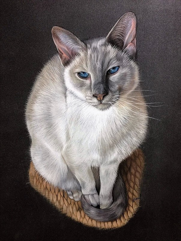 07-Siamese-Cat-Virginie-Agniel-Pastel-Drawings-of-Cats-and-Dogs-www-designstack-co