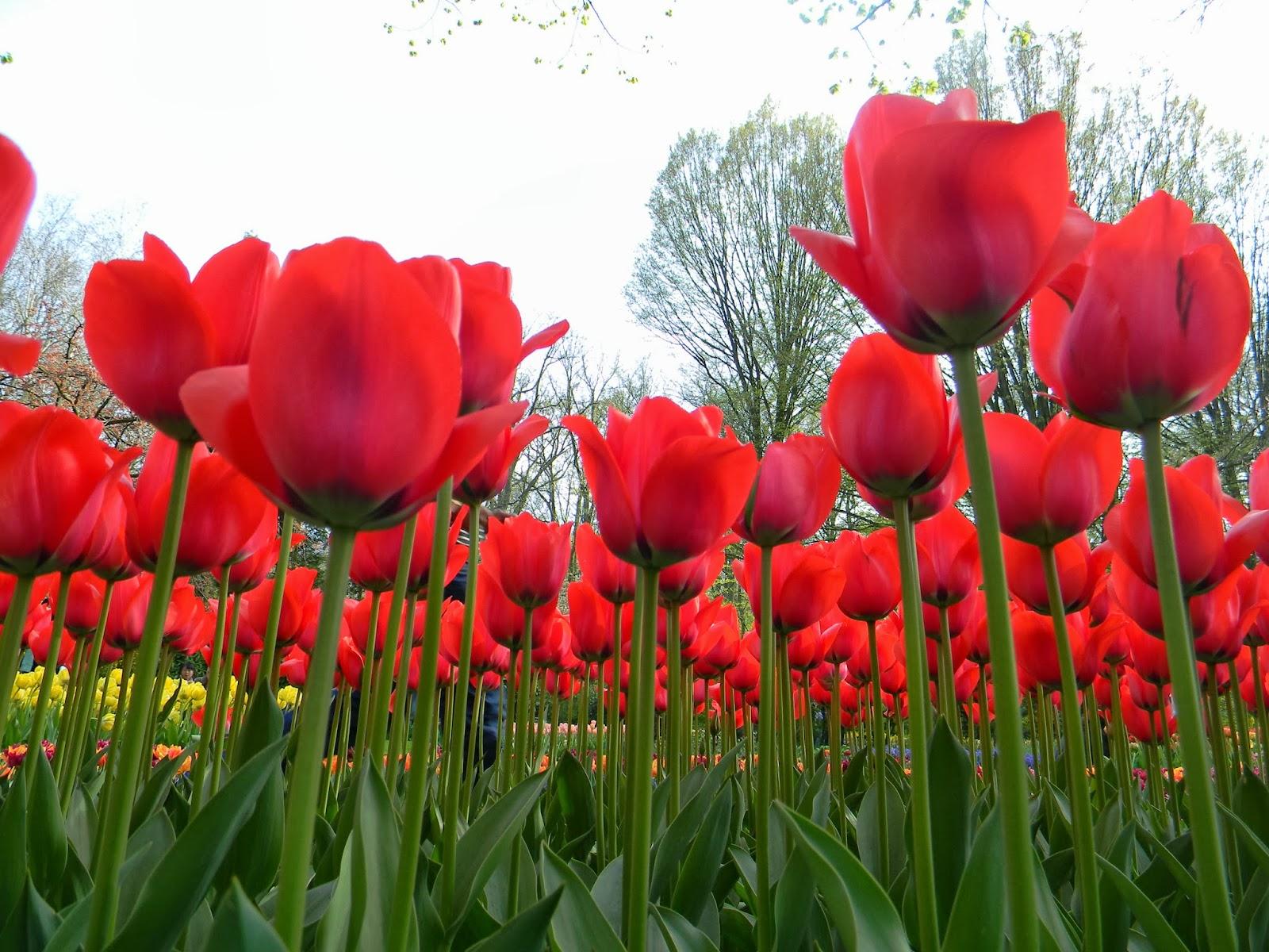 Jurus Jitu Agar Cinta Istrimu Selalu Berbunga Bunga Untukmu Abu