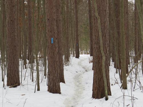 trail with blue blazes