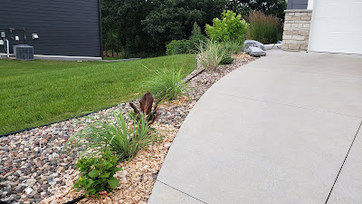 Lemongrass planted in driveway