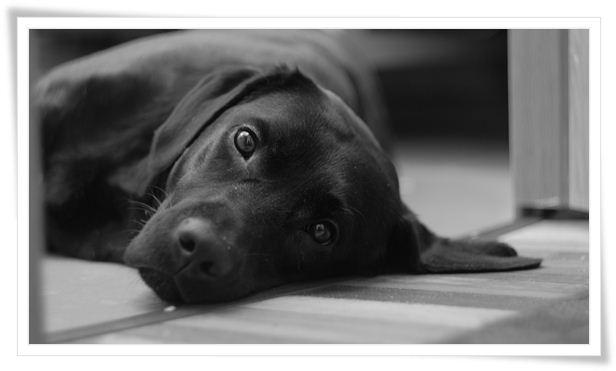 dog obedience training near me