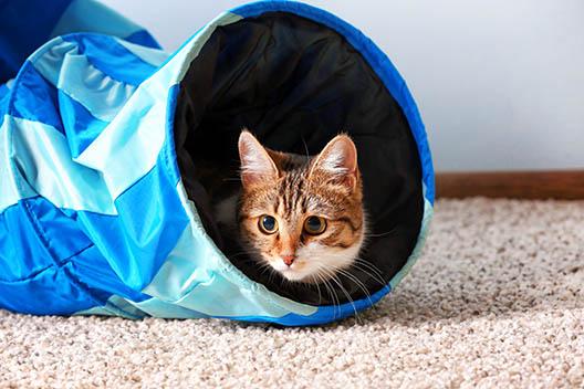 Jakie zabawy lubią koty?