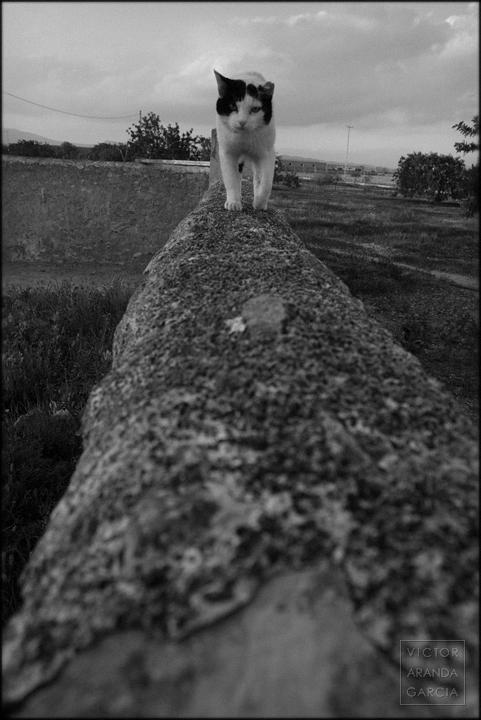 fotografía, gato, muro, Fuente Álamo