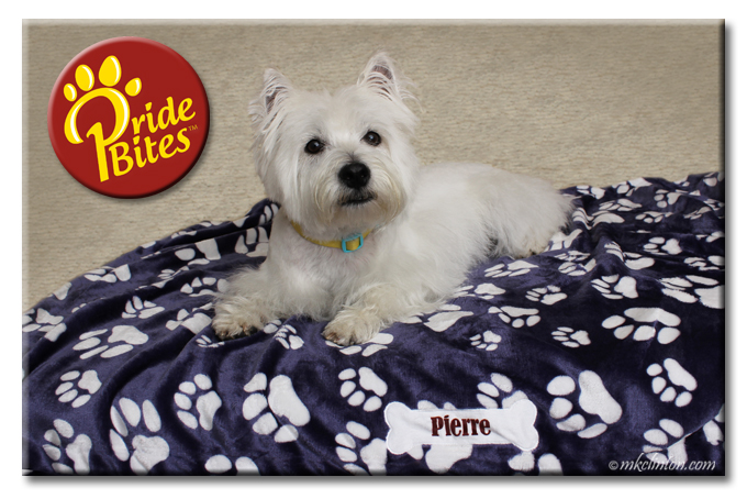 Westie on top of a PrideBites microfleece balnket