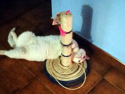 por que son necesarios rascadores gatos