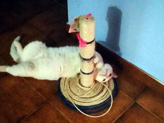 ¿Por qué son necesarios los rascadores para los gatos?