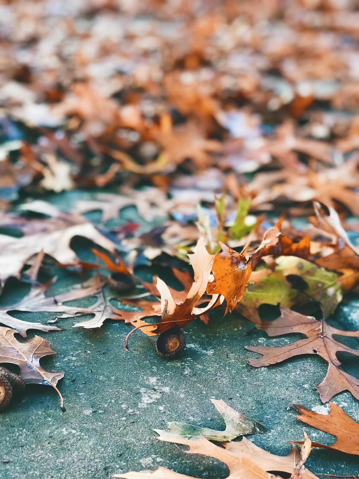 Happy Diaries: Bye Bye Fall And Hello Winter Greatness!
