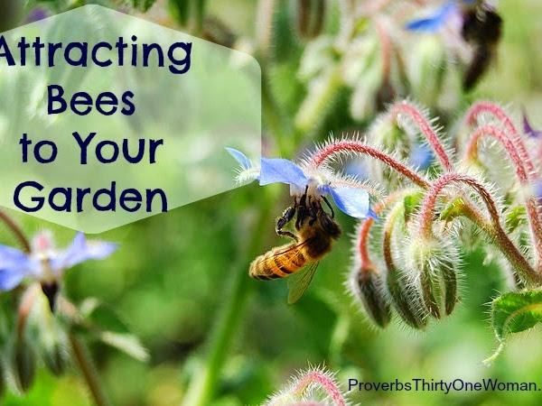 Attracting Bees to Your Garden - and Dispelling Some Bee Myths