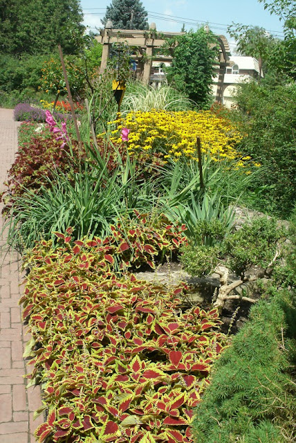 Coleus, rudbeckia and gladioli at James Gardens Etobicoke by garden muses: a Toronto gardening blog