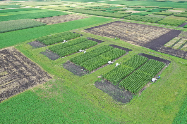 Traditional vs advanced nitrogen management practices in poorly drained soils