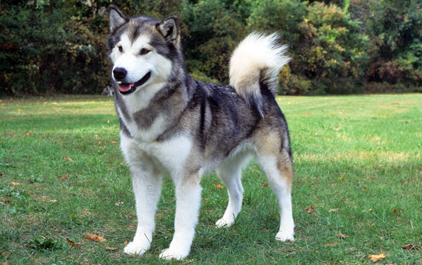 Top 5 Most Dangerous Dog Breeds