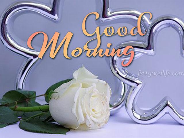 white good morning rose donlod