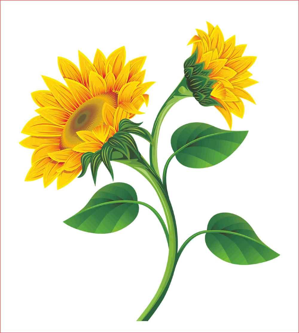 30 Gambar Sketsa Bunga Mudah  Bunga Matahari Mawar